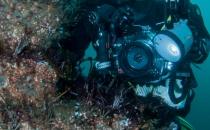 Photographing marine life
