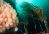 Diving - Garda Stack, Vaila